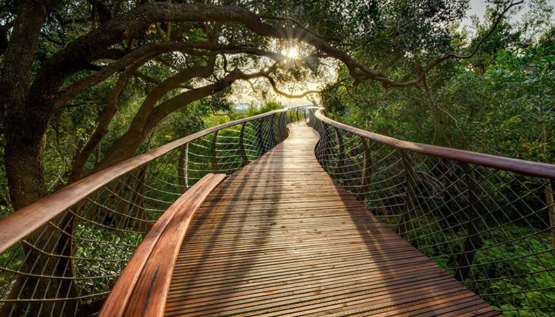Cape Town Canopy Walkway That Will Bow Your Mind (2)