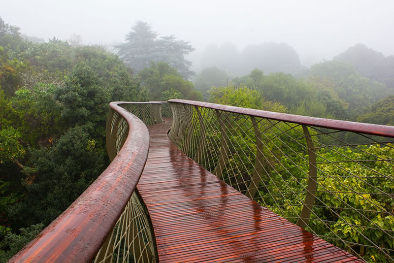 Cape Town Canopy Walkway That Will Bow Your Mind (3)
