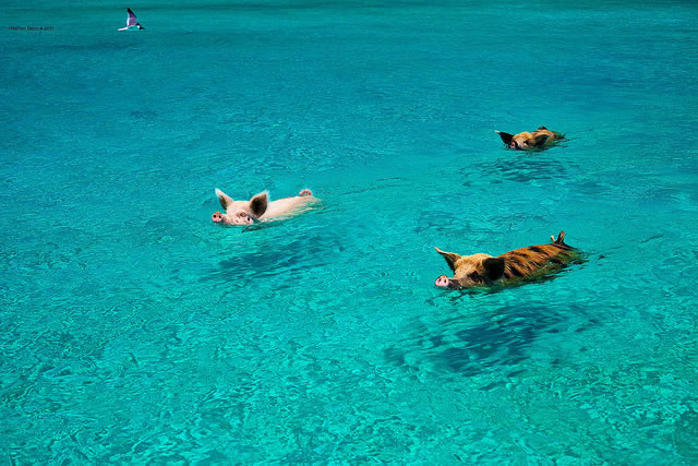 10 Small Island Getaways Taken Over By Cute And Cuddly Animals 3