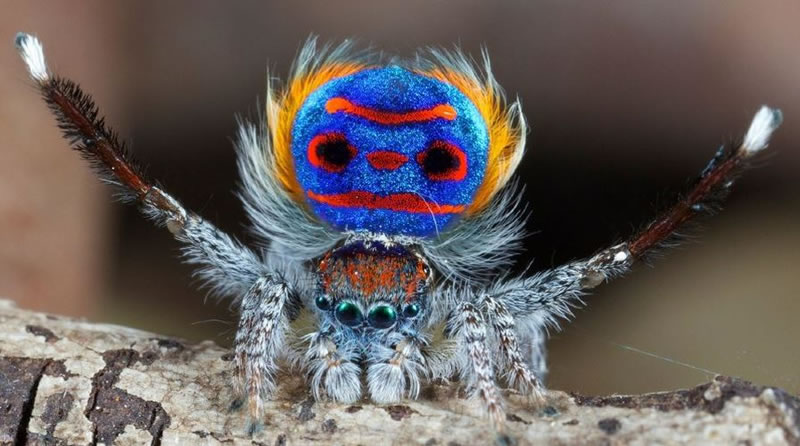 Freaky Spiders That Would Shock Even A Bug Exterminator 1