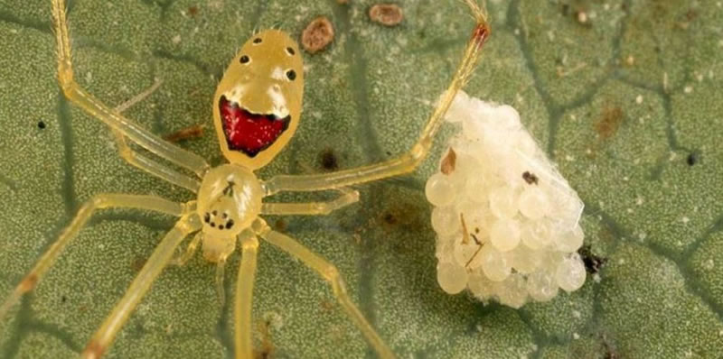 Freaky Spiders That Would Shock Even A Bug Exterminator 11