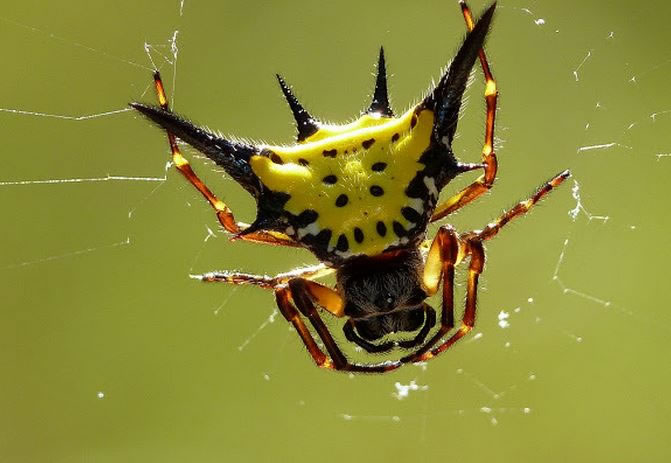 Freaky Spiders That Would Shock Even A Bug Exterminator 19
