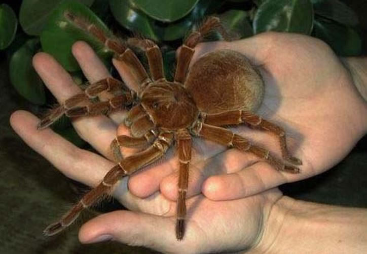 Freaky Spiders That Would Shock Even A Bug Exterminator 3