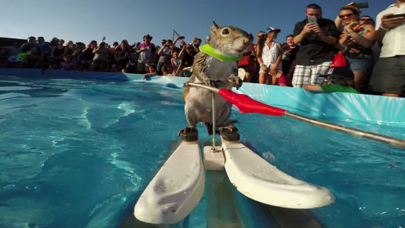 Meet The Adorable Squirrel That Loves To Water Ski 2