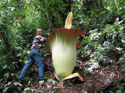 Visit Indonesia For A Chance To See The Biggest Flower In The World