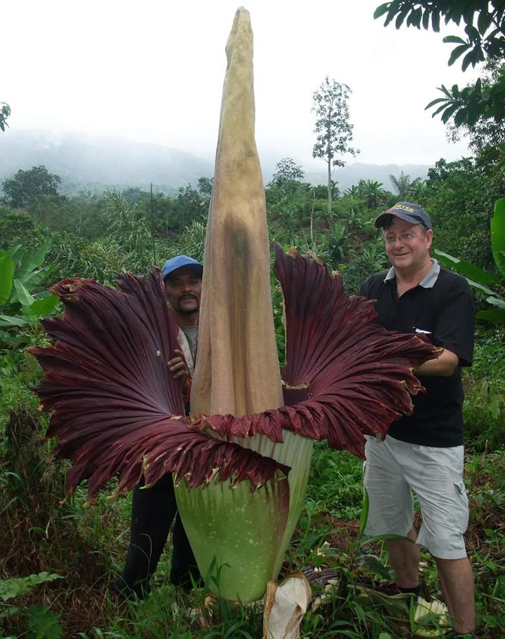 visit-indonesia-for-a-chance-to-see-the-biggest-flower-in-the-world-3