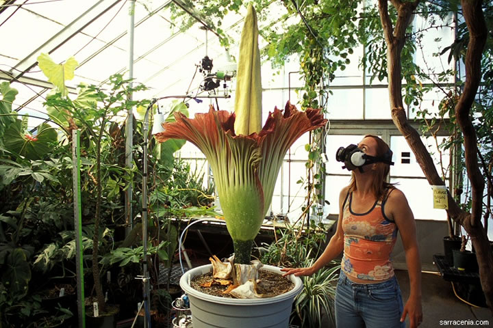 visit-indonesia-for-a-chance-to-see-the-biggest-flower-in-the-world-6