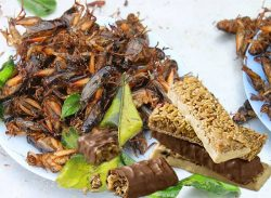 Could You Eat Protein Snack Bars Made From Insects?