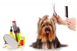 How Often Should You Groom Your Pet?
