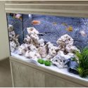 A Simple Guide on How to Set up an Aquarium at Home