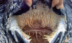 Most Amazing And Terrifying Teeth Ever But Can You Guess Which Animal?