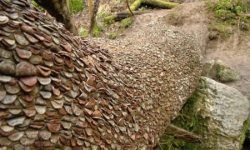Mysterious Coin Covered Wishing Trees In The UK