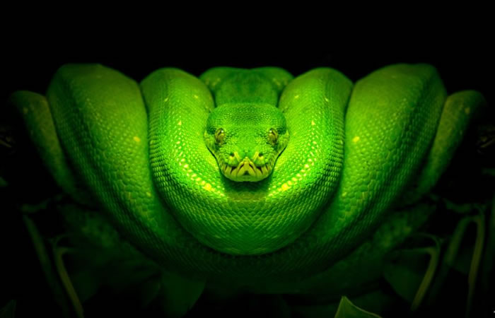 Beautiful Creatures 10 Amazing Python Close Ups