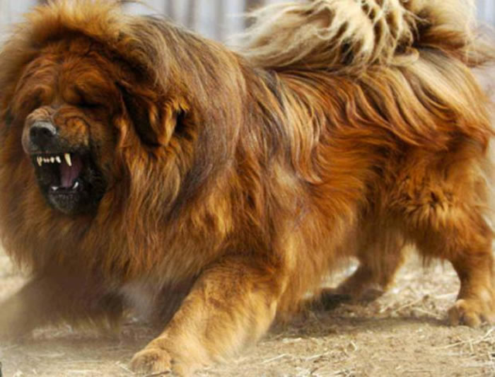 Most Expensive Dog In The World Top 10