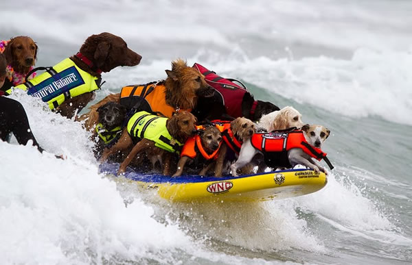 Surfing Camp For Dogs
