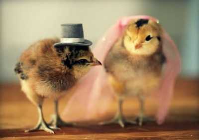 Amazing Cutest Chicks In Hats