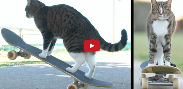 Ever Seen A Cat Riding A Skateboard