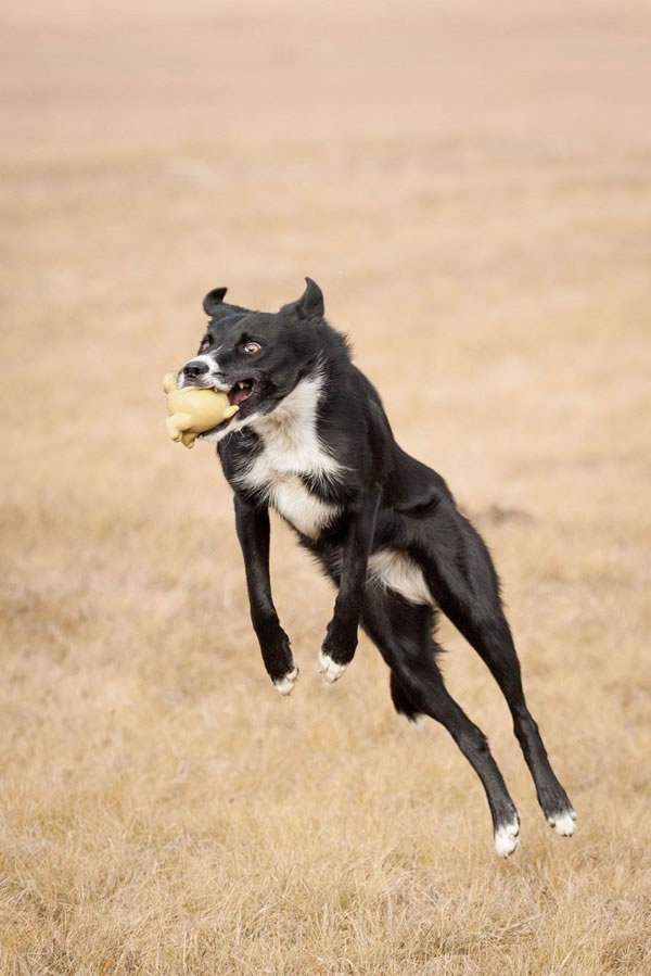 Creative And Funny Dog Stock Photography Pictures