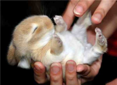 Cute Rabbits Sleepy Time 30 Adorable Snoozing Bunnies