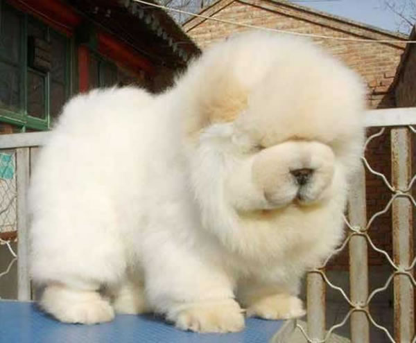 21 Cutest Fluffy Pets Need Some Serious Pet Grooming