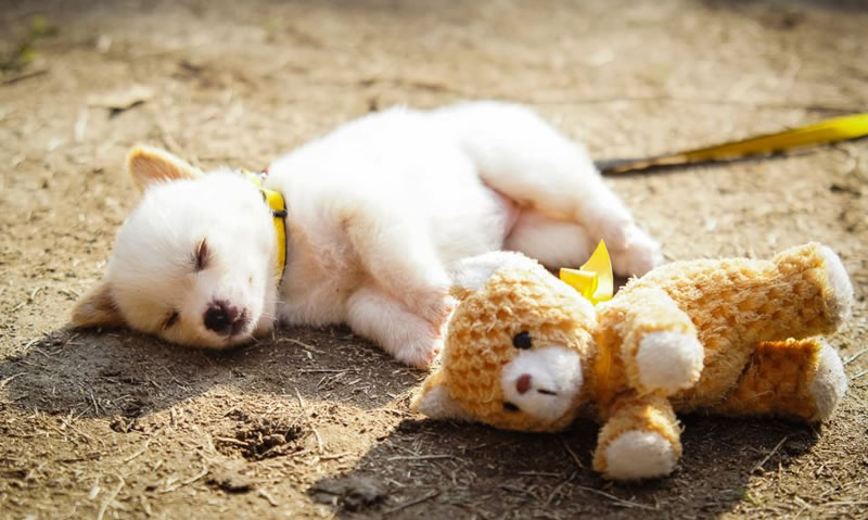 21 Cute Sleeping Animals Taking A Snooze
