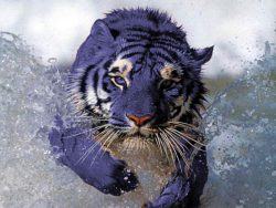Discover China`s Hidden secret – Maltese Tigers With Blue Fur