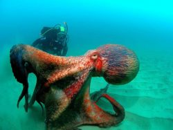 Giant Octopus Escapes Through Tiny Hole On Deep Sea Fishing Boat