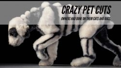Crazy Pet Cuts Owners Had Done On Their Cats And Dogs