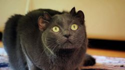 Meet The Cat With Four Ears That Was Rescued From A Cat Shelter