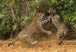15 Incredible Photos Of Wildlife